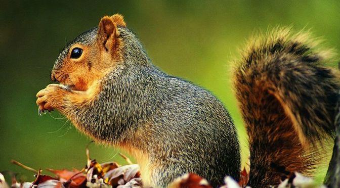 scoiattoli_002